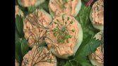 Pepinos com mousse de salmão